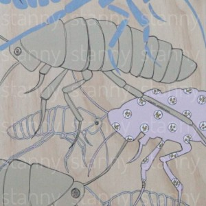 insects 3 b